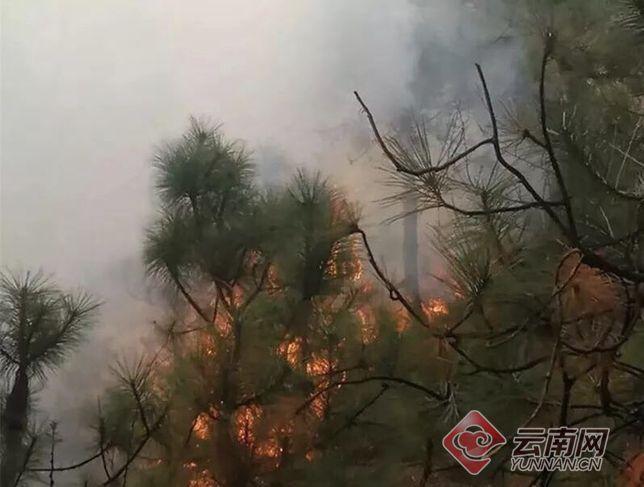 云南昭通森林火灾