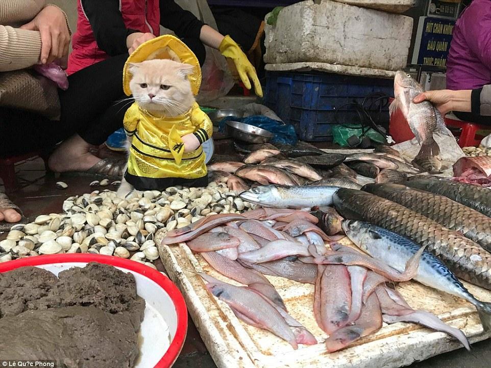 """越南一只小猫造型时尚 坐海鲜摊旁""""卖鱼"""""""