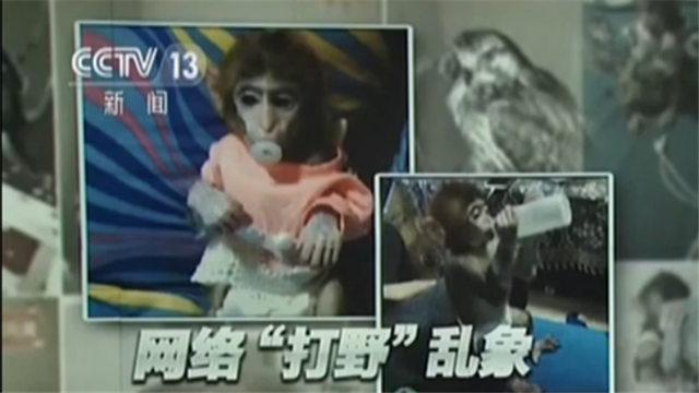 网红直播养猴牵出大案 35人被抓16只猕猴被解救