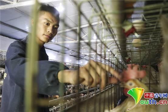 8月29日,胡万祥在鸡舍检查蛋鸡生长情况。张昊 摄_副本1