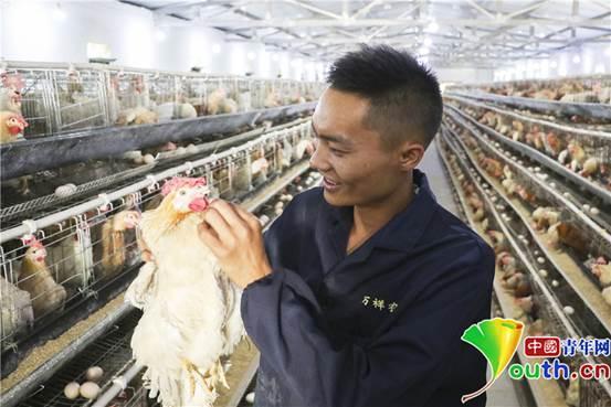 8月29日,胡万祥在鸡舍检查蛋鸡生长情况。张昊 摄1_副本1
