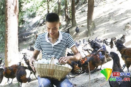 8月29日,胡万祥在蛋鸡散养场清点刚刚捡收的一提篮鸡蛋。张昊 摄_副本1