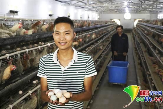 8月29日,胡万祥在鸡舍展示刚刚捡收的鸡蛋。张昊 摄_副本1