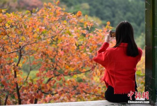 香山红叶观赏期结束 红叶文创产品受追捧