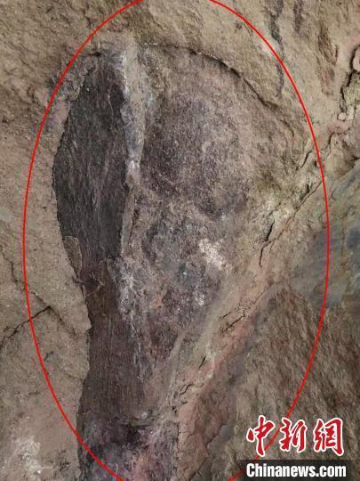四川自贡市民发现疑似恐龙化石 专家初判距今约1.6亿年