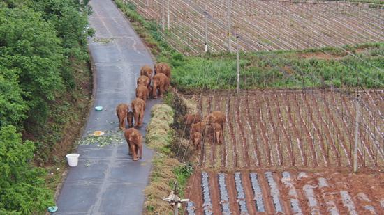 大象回家住哪里