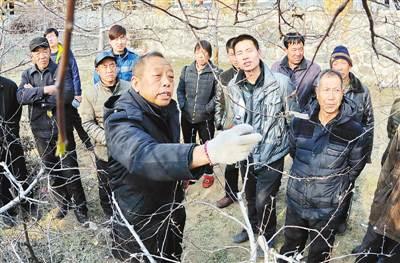 李保国在河北省内丘县岗底村向村民讲解果树修剪知识。新华社记者 朱旭东 摄