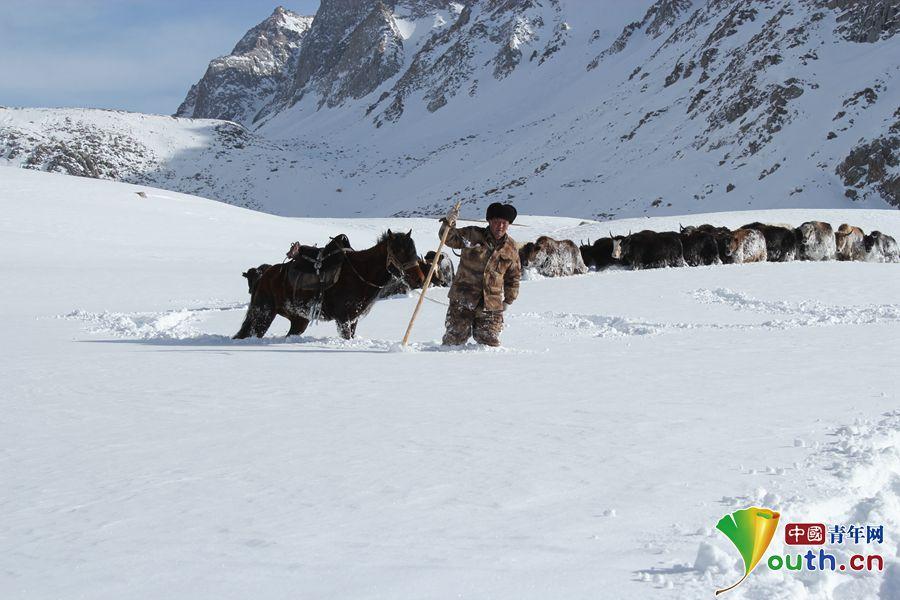 努尔江赶着牦牛翻越冰大坂。资料图