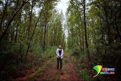 马玉英曾经治沙的地方已满是绿树。中国青年网记者 王增强 摄