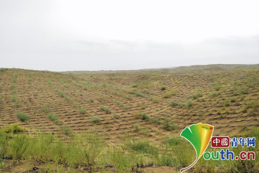 宁夏中卫沙坡头:麦草方格扎出绿