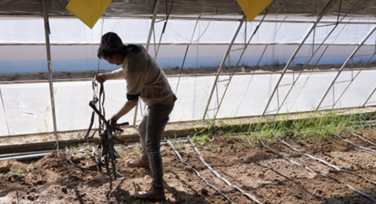 脱贫攻坚看拉萨 引技术开荒滩 尼木县现代农业产业助力群众走上致富路663.png