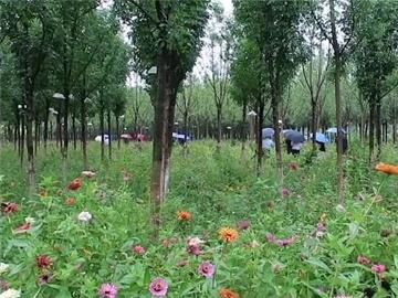 天津绿色发展 美景常伴市民.jpg